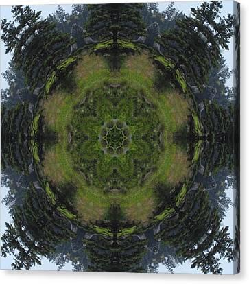 Spruce Tree Twins Canvas Print by Trina Stephenson