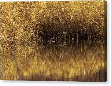 Spun Gold Canvas Print by Annette Hugen