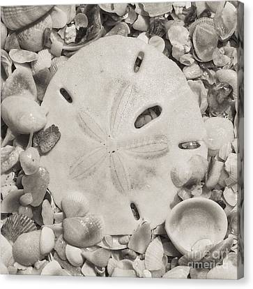 Square Sepia Sand Dollar Canvas Print