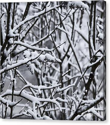 Square Snowy Branches Canvas Print by Birgit Tyrrell