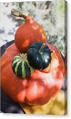 Squashes And Pumpkins In A Pile In The Open Air (overhead View) Canvas Print