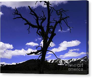 Canvas Print featuring the photograph Squigly Tree by Janice Westerberg