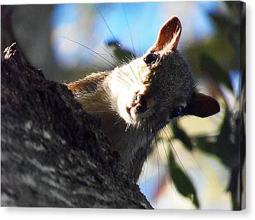 Canvas Print featuring the photograph Squirrel 003 by Chris Mercer