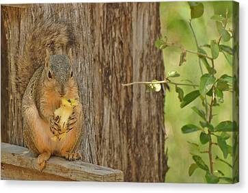 Canvas Print featuring the photograph Squirrel And Apple by Susan D Moody