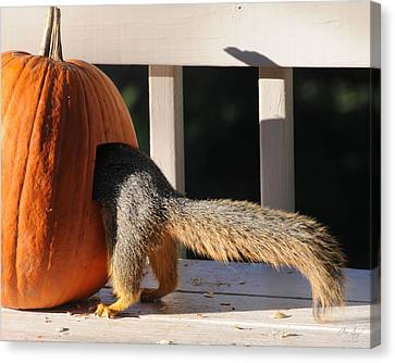 Squirrel And Pumpkin - Breakfast Canvas Print by Aaron Spong