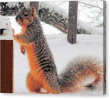 Canvas Print featuring the photograph Squirrel Checking Out Seeds by Janette Boyd
