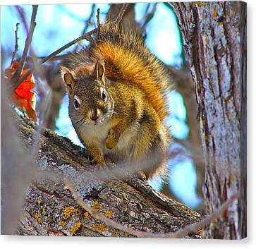 Squirrel Duty. Canvas Print by Johanna Bruwer