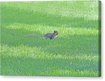 Canvas Print featuring the photograph Squirrel In Grass by Lorna Rogers Photography