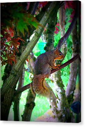 Squirrel In My Tree Canvas Print