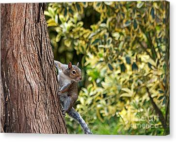 Canvas Print featuring the photograph Squirrel by Kate Brown