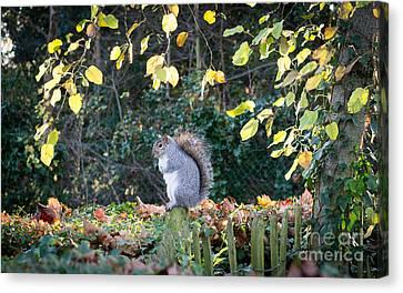 Squirrel Perched Canvas Print by Matt Malloy