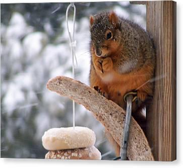 Ridgewood Canvas Print - Squirrel Snack IIi by Jim Finch