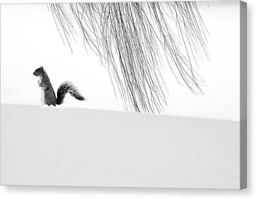Squirrel Canvas Print by Yue Wang