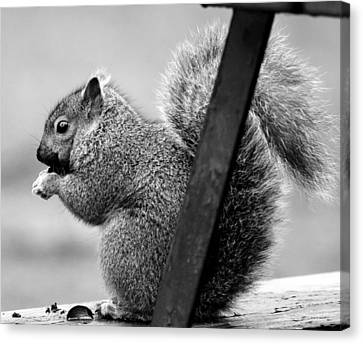 Canvas Print featuring the photograph Squirrels by Ricky L Jones