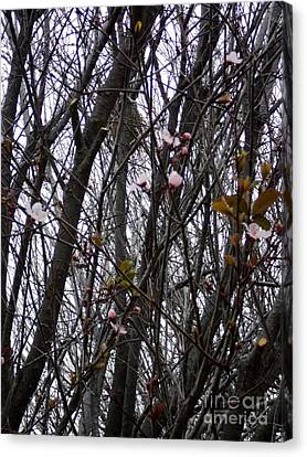 Canvas Print featuring the photograph Spring Blossoms by Carla Carson