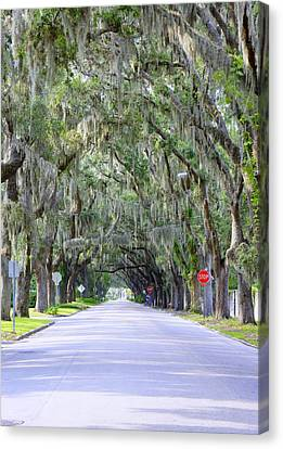 St. Augustine Road Canvas Print by Laurie Perry