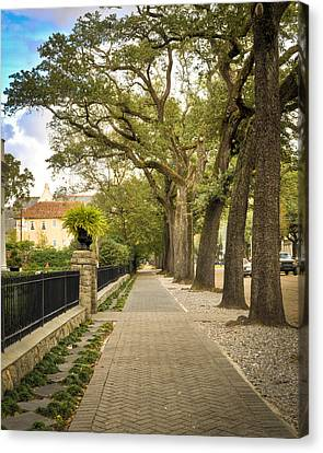 St Charles Live Oak Trees Canvas Print by Ray Devlin