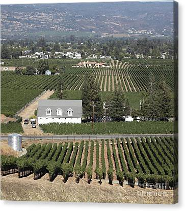 Napa Valley And Vineyards Canvas Print - St Helena Vineyards Napa California 5d29499 Square by Wingsdomain Art and Photography