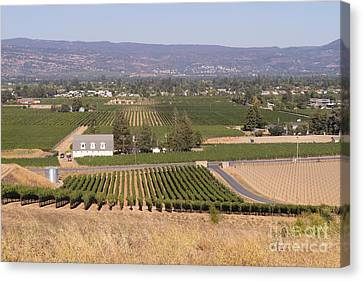 St Helena Vineyards Napa California Dsc1739 Canvas Print by Wingsdomain Art and Photography