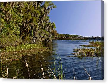 Live Oaks Canvas Print - St Johns River Florida by Christine Till