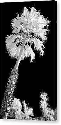 St. Maarten Tropical Palm Canvas Print