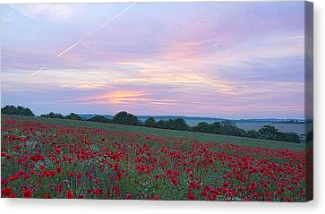 St Margarets Poppies Canvas Print