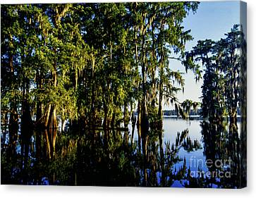 St Martin Parish Lake Martin Cypress Swamp Canvas Print by Thomas R Fletcher