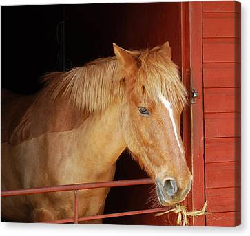 Stabled Canvas Print