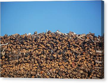 Woodpile Canvas Print - Stack Of Firewood Pile Against Blue Sky by Panoramic Images