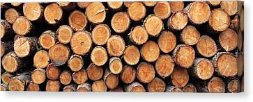 Stack Of Logs In Forest, Burrator Canvas Print by Panoramic Images
