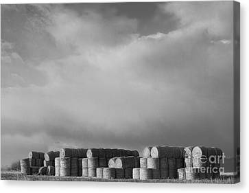 Stacked Round Hay Bales Bw Canvas Print by James BO  Insogna