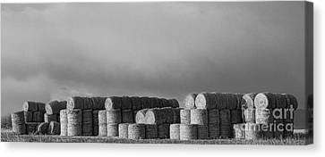 Stacked Round Hay Bales Bw Panorama Canvas Print by James BO  Insogna