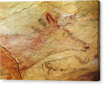 Archaeology Canvas Print - Stag From The Caves Of Altamira  Cave Painting  by Prehistoric