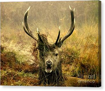 Stag Party The Series. One More For The Road Canvas Print