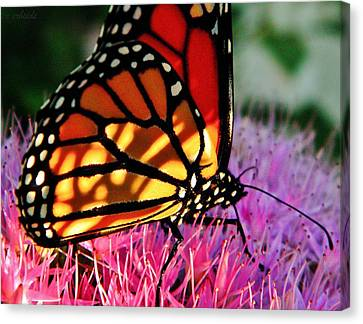 Stained Glass Monarch  Canvas Print