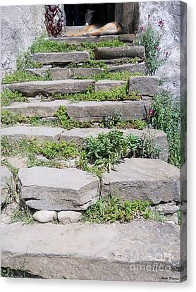 Canvas Print featuring the photograph Stairs by Ramona Matei