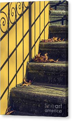 Maple Season Canvas Print - Stairs With Leaves by Carlos Caetano