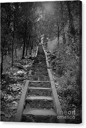 Stairway In The Woods Canvas Print