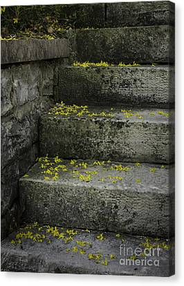 Stairway To Spring Canvas Print