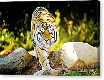 The Tiger Canvas Print - Stalker by Scott Pellegrin