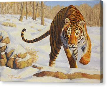 Stalking Siberian Tiger Canvas Print by Crista Forest