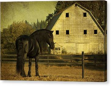 Stallion At Rest D1535 Canvas Print by Wes and Dotty Weber