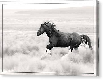 Stallion Blur Canvas Print by Wes and Dotty Weber