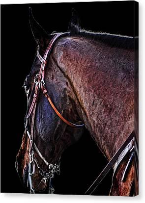 Stallion Canvas Print by Camille Lopez
