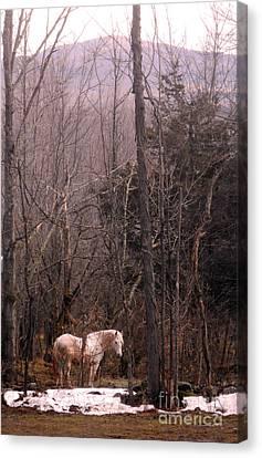 Stallion In The Mountain Pasture Canvas Print
