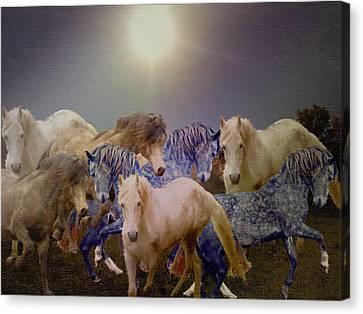 Stallions On Stage As Vivaldi's Spring Plays Canvas Print