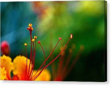 Stamen And Pistil Canvas Print