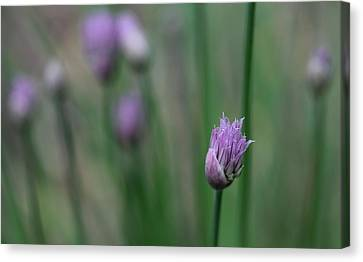 Canvas Print featuring the photograph Not Just A Pretty Flower by Debbie Oppermann