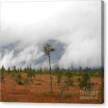 Stand Alone Canvas Print by Laura  Wong-Rose