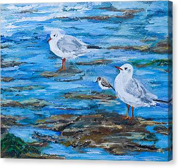 Sea Birds Wait Canvas Print